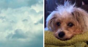 Una donna vede la faccia del suo amato cane tra le nuvole, poche ore dopo la sua scomparsa