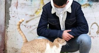 Un team di ricercatori sviluppa un vaccino per gatti che può bloccare l'allergia negli umani