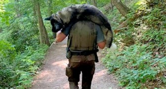 Un ranger coraggioso trasporta sulle spalle un cane per salvarlo dalla disidratazione
