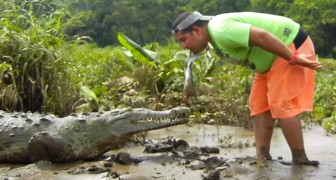 Have you ever seen anyone feed a crocodile as if it was a dog?