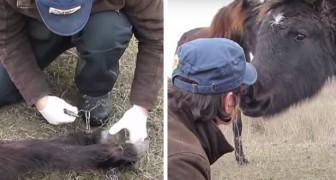 Un cavallo ringrazia l'uomo che lo ha liberato dalle catene con un tenero bacio