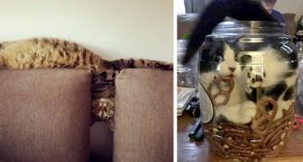 20 katten die zo flexibel zijn, dat ze lijken te zijn gemaakt van vloeibaar materiaal