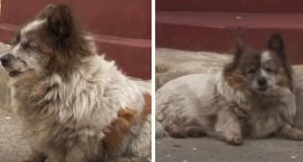 """Deze oude hond wacht al 10 jaar op de terugkeer van haar baasje: die had tegen haar gezegd: """"wacht hier"""