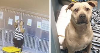 Una mujer es capturada mientras abandona a un perro en un refugio y se toma una foto con el dedo del medio levantado
