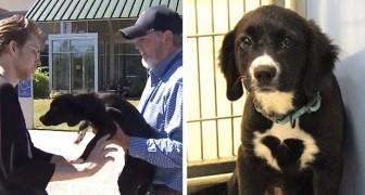 Een gezin wacht 27 uur voor een toevluchtsoord om een lieve hond te adopteren met een hart op zijn borst