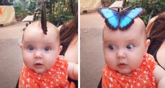 I genitori riescono a riprendere il magico momento in cui una gigantesca farfalla blu si posa sulla testa della figlia