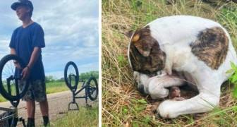 Drie 13-jarige jongens redden een hond van de straat die niet meer kon bewegen