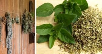I metodi più semplici per essiccare le erbe aromatiche in casa e fare scorta di spezie per tutto l'anno