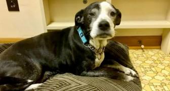 Vogliono far sopprimere il cane anziano perché si sono stancati di tenerlo: il veterinario si rifiuta e lo porta in un rifugio