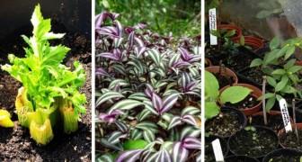 I consigli e i trucchi più utili per praticare giardinaggio senza spendere troppo