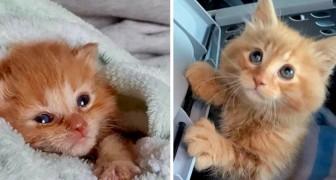 Ze redden het leven van een kitten om het te laten adopteren, maar hij kiest ervoor om bij hen te blijven