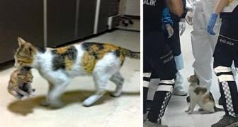 En kattmammas unge är i fara så hon tar med den till akuten och ber läkarna om hjälp