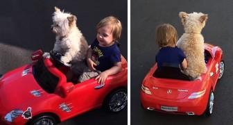 """Een hondje rijdt haar vriendje rond door haar speelgoedauto te """"besturen"""""""