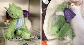 Il gatto ha così tanta paura di andare dal veterinario che viaggia sempre accompagnato dal suo drago di peluche