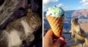 12 immagini di scoiattoli così teneri ed imbranati che ci fanno venir voglia di vivere come loro