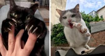 12 gatti che hanno mostrato gli artigli ricordando ai loro umani che dietro gli occhi dolci si nasconde un predatore