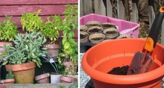 Le dritte più utili da tenere a mente per coltivare al meglio le piante in vasi e fioriere