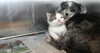 A dog who wasn't pregnant began nursing a stray kitten, managing to save her life