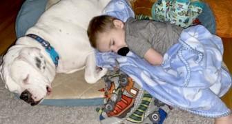 Elke nacht slaapt deze boxer opgerold naast zijn menselijke broer: ze zijn praktisch onafscheidelijk