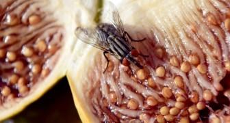 Was alles passieren kann, wenn eine Fliege auf eurem Essen landet