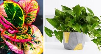 7 piante da interno che riescono a sopravvivere anche negli angoli più bui della casa