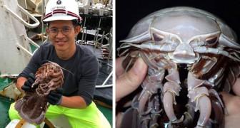 In Indonesien hat man eine neue Meerestierart entdeckt: Aus den Tiefen taucht eine riesige Kakerlake auf