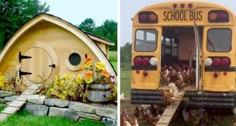16 pollai creativi in cui le galline si sentono protagoniste di un scenografia da film