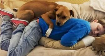 Uma criança autista conhece um cachorro com histórico de abuso: uma nova vida começa para ambos