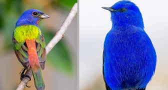 10 pássaros de todo o mundo que são um verdadeiro triunfo de formas e cores