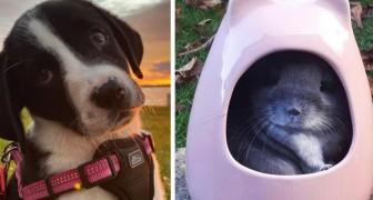 13 foto's van schattige, onweerstaanbare puppy's