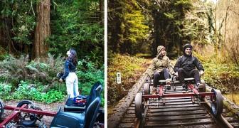 Diese Bahn ermöglicht es den Besuchern, auf den Schienen zu radeln und durch einen Mammutbaumwald zu fahren