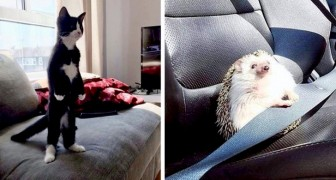 12 animali domestici che ce l'hanno messa tutta ad imitare altre specie con risultati piuttosto esilaranti