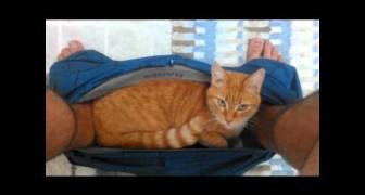 Diese Katze hat sich einen ziemlich ungünstigen Ort ausgesucht, um ein kleines Nickerchen einzulegen!