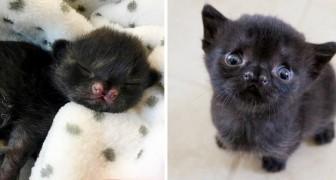 Ein schwarzes Kätzchen erobert alle mit seinem drolligen Gesicht: Es wurde ganz allein in einem verlassenen Hof gefunden