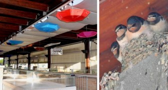 En este mercado cubierto los comerciantes han colgado paraguas de colores para proteger los nidos de golondrinas
