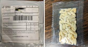 Centinaia di cittadini americani ricevono per posta semi provenienti dalla Cina che nessuno ha mai ordinato