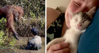 12 veces en donde nuestros amigos animales han logrado expresar las emociones más tiernas y profundas