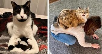 11 scatti che riassumono alla perfezione i comportamenti più strani di cui i gatti possono essere protagonisti