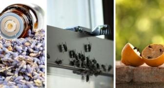 3 metodi alternativi e naturali per allontanare le mosche senza ricorrere all'insetticida