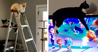 13 katter som har struntat i vad andra tycker och gjort som de själva vill