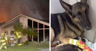 Um cão policial aposentado salva uma família inteira presa em um incêndio em casa