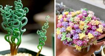 12 piante succulente dalle forme e dai colori così fantasiosi che sembrano scese da altro pianeta