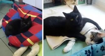 Este gatinho preto cuida dos bichos de um abrigo, como se fosse uma babá