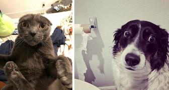 12 huisdieren die door hun baasjes op heterdaad betrapt werden in hilarische en rampzalige situaties
