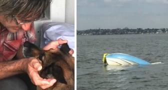 Hij heeft een ernstig bootongeluk: zijn trouwe hond zwemt 11 uur om zijn leven te redden