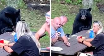 Un orso affamato si unisce a sorpresa a una famiglia durante un tranquillo picnic nel bosco