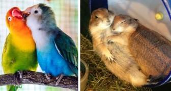 15 foto dimostrano come il vero amore esiste anche nel mondo animale