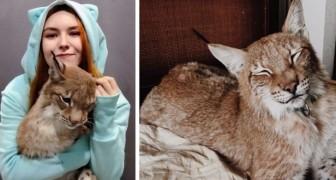 Questa ragazza ha salvato due linci da una fattoria di pellicce e le ha allevate come fossero due teneri gattoni