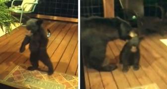Um ursinho chega muito perto de uma casa: sua mãe o repreende e o leva embora