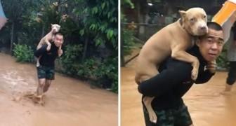 Un homme met son chien sur ses épaules pour le sauver de l'inondation
